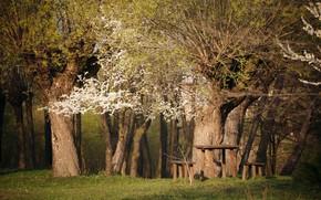 Картинка природа, дерево, весна