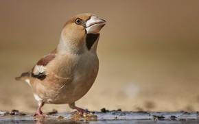 Картинка фон, птица, клюв