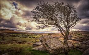 Картинка камни, дерево, Англия, Девон