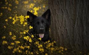 Картинка собака, природа, друг