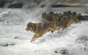 Картинка собаки, снег, рассвет, стая, художник, Alfred Kowalski-Wierusz