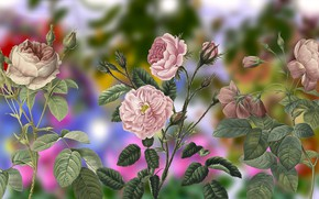 Картинка Vintage, Kwiaty, Róże