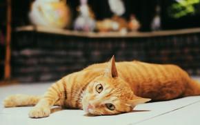 Картинка кошка, кот, взгляд, темный фон, рыжий, лежит, боке