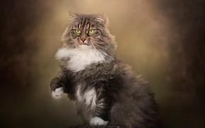Картинка кот, фон, пень, пушистый, лапка, котейка