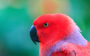 Картинка фото, голова, попугай