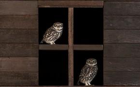 Картинка птицы, сова, доски, две, окно, пара, черный фон, совы, парочка, дуэт, сыч, сычи
