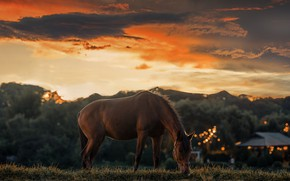 Картинка трава, закат, огни, конь, лошадь, вечер, домики, сумерки, поселение, пасется