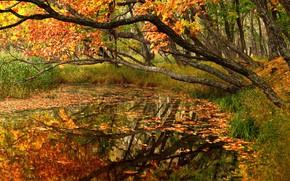 Картинка осень, лес, деревья, пейзаж, природа, пруд, листва, Приморье, Максим Евдокимов