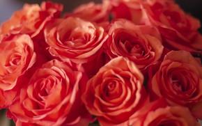 Картинка цветы, розы, букет, красивые