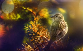 Картинка природа, птица, ветка, хвоя, боке