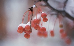 Картинка зима, макро, ягоды
