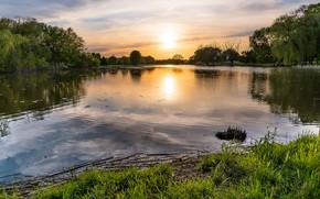 Картинка лето, небо, трава, солнце, облака, деревья, закат, озеро, пруд, отражение, рассвет, берег, водоем, кустарники
