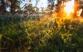 Картинка sunset, spiders Web, Сагайдак Павел
