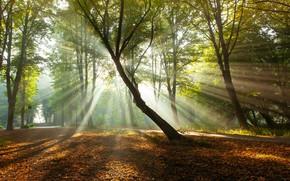 Картинка осень, деревья, парк, утро, Нидерланды, солнечные лучи, опавшая листва