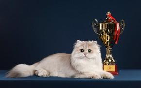 Картинка кошка, кот, взгляд, поза, фон, мордочка, награда, лежит, кубок, фотостудия, призёр
