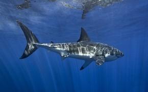 Картинка море, вода, свет, блики, акула, подводный мир, под водой, плавание