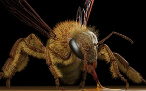 Картинка оса, арт, Eric Keller, Apis mellifera (honey bee)