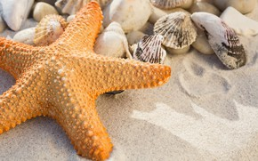 Картинка песок, пляж, лето, звезда, ракушки, summer, beach, sea, sand, marine, starfish, seashells