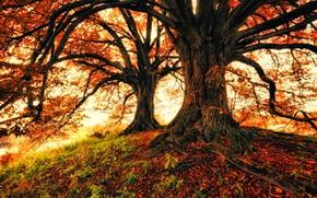 Картинка осень, деревья, природа, листва