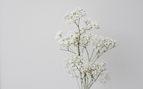 Картинка цветы, фон, белые