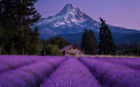 Картинка поле, деревья, пейзаж, горы, природа, дом, вечер, США, лаванда, Doug Shearer