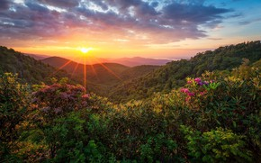 Картинка лес, солнце, пейзаж, закат, природа, красота
