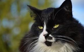 Картинка кошка, небо, кот, усы, взгляд, морда, свет, крупный план, природа, зеленый, фон, голубой, черно-белый, портрет, …