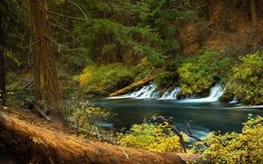 Картинка лес, река, водопад, Орегон, каскад, Oregon, Река Метолиус, Metolius River