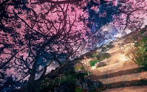 Картинка ночь, весна, сад, сакура, ступеньки, нео, by K&P