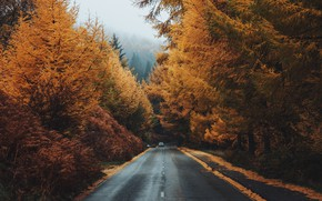 Картинка дорога, осень, лес, Daniel Casson