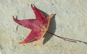 Картинка осень, минимализм, красный лист