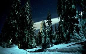 Картинка снег, звёзды, зима, природа, дорога, деревья, ели, ночь, пейзаж