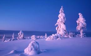 Картинка зима, снег, природа