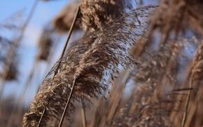 Картинка зима, трава, ветер, боке