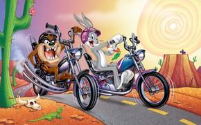 Обои Кролик, Мотоцикл, Мультфильм, Taz, Тасманский дьявол, Looney Tunes, Багз Банни, Bugs Bunny, Tasmanian Devil, Кролик ...