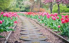 Картинка дорога, лето, тюльпаны