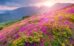 Картинка Flower, Mountain, Landscapes, Natura