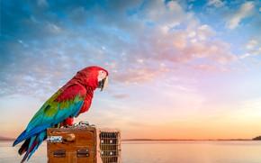Картинка закат, река, птица, попугай