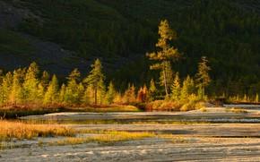 Картинка песок, осень, лес, свет, природа, берег, ели, холм, речка