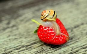 Картинка макро, природа, улитка, клубника, nature, strawberry