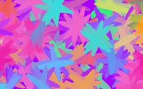 Картинка цветы, яркий, лепестки