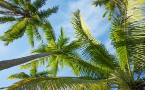 Обои лето, небо, солнце, пальмы, summer, beach, paradise, palms, tropical