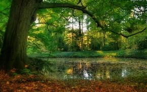 Картинка пруд, парк, дерево