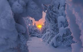Картинка зима, солнце, снег, деревья, природа