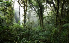 Картинка лес, деревья, природа, туман