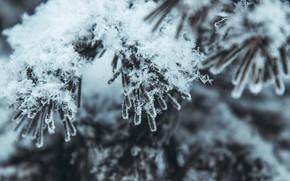 Картинка зима, снег, природа, ель, сибирь