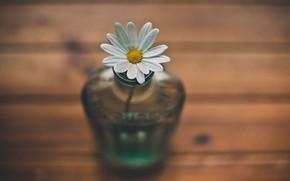 Картинка flower, nature, style, macro, lanscape