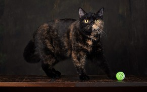 Картинка кошка, взгляд, поза, темный фон, стол, шарик, мордочка, фотостудия, пятнистая, пестрая