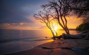 Картинка песок, море, пляж, солнце, деревья, закат, ветки, берег, вечер, прибой, силуэты, коряги