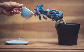 Картинка цветок, вода, чашка